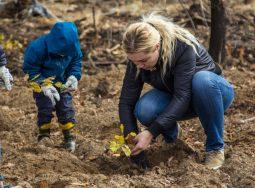 Новый лес сотрет углеродный след