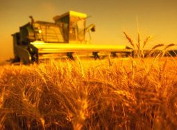 Урожая больше, спроса меньше
