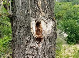 В Волгограде планируется замена аварийных деревьев