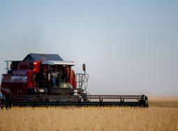 Сельское хозяйство Волгоградской области получит господдержку