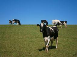 В Калачевском районе запланировано строительство нового животноводческого комплекса