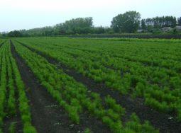 Жители Камышина смогут посадить деревья