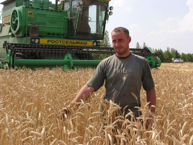 В Волгоградской области убрано более 500 тыс тонн зерна