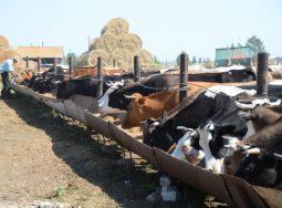 Возросло производство молока в волгоградском регионе