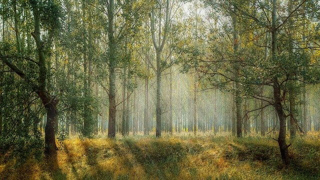 В регионе запрещено посещать лес до начала осени