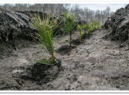 В Волго-Ахтубинской пойме посадят лес