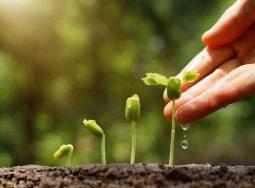 МСП: естественный отбор